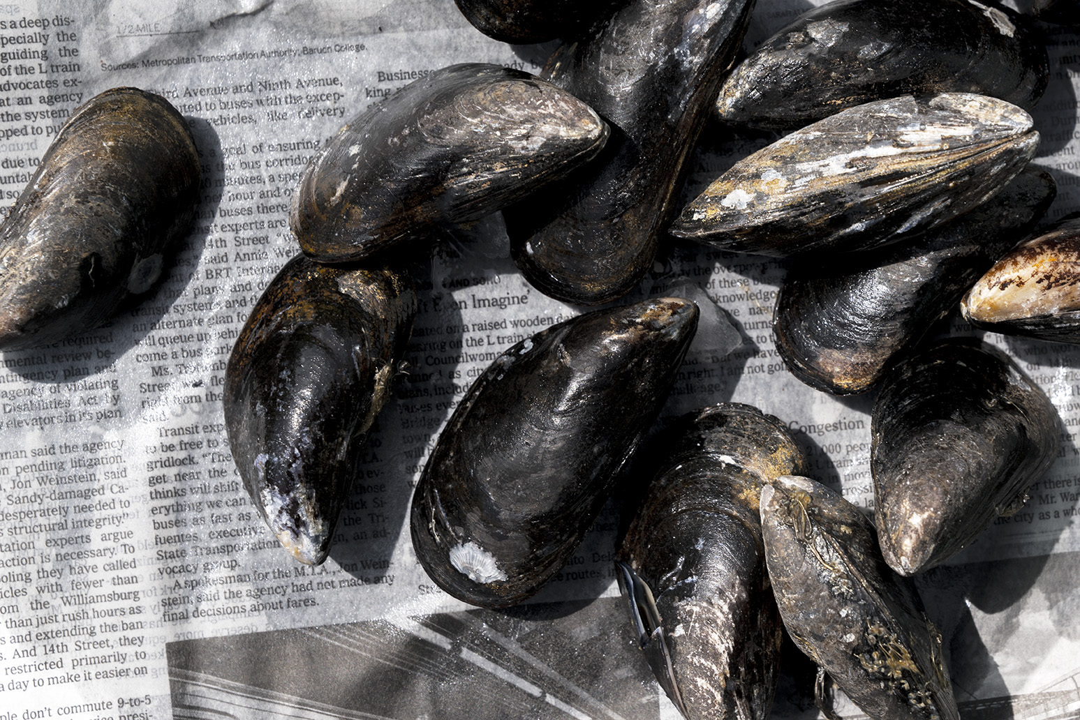 mussels_newspaper